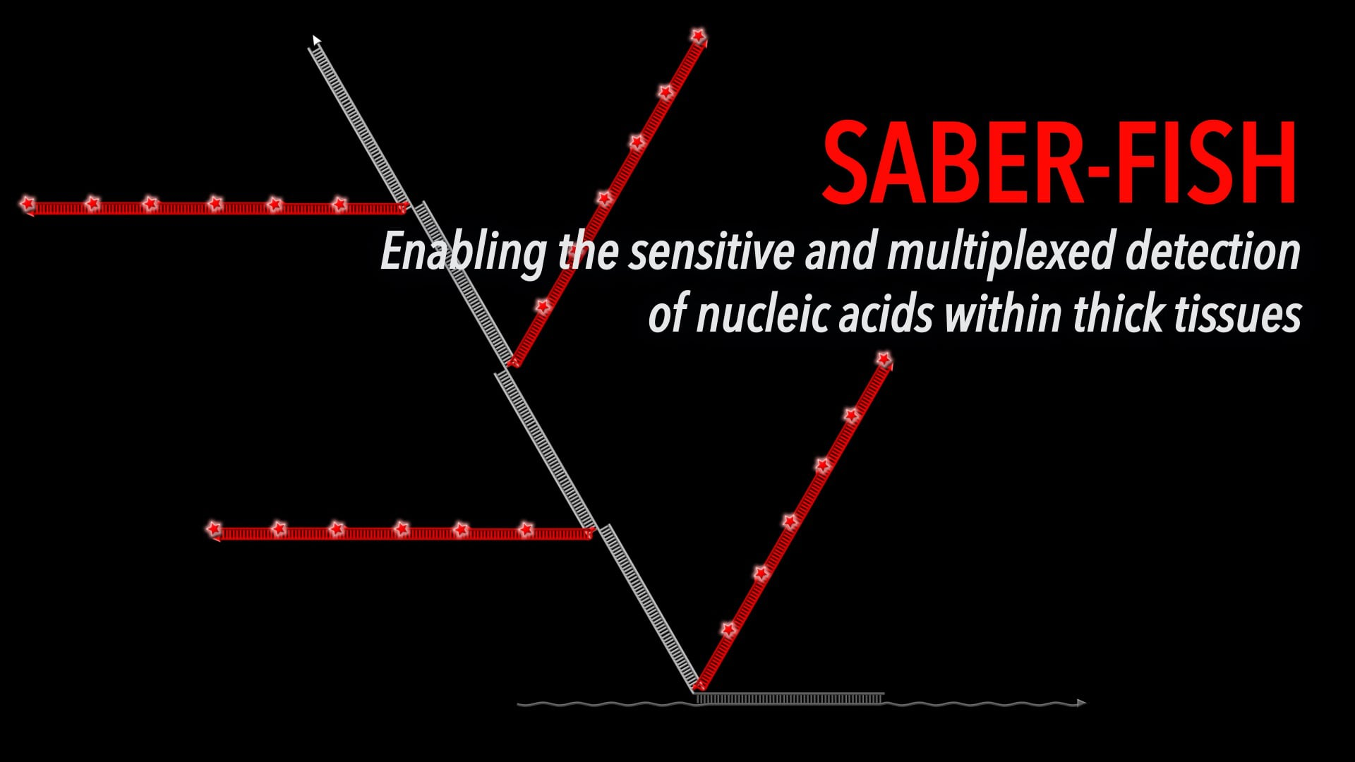 SABER-FISH: Enabling the sensitive and multiplexed detection of nucleic acids within thick tissues