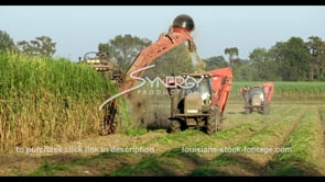 854 cutting sugarcane on Louisiana farmland video stock footage