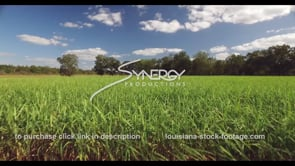 856 flying above sugarcane stalks aerial drone view