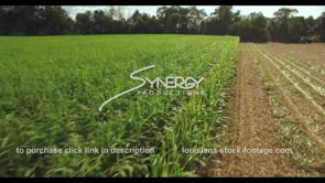 871 sugarcane field aerial drone view