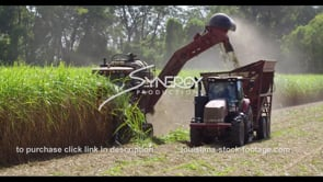 873 sugarcane field harvest