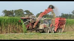875 sugarcane harvest close up stock footage