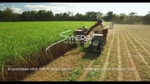 877 Nice sugarcane harvesting aerial tracking shot