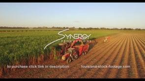 878 very nice sugarcane harvesting at sunset