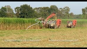 883 sugarcane harvesting at evening sunset