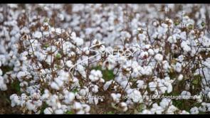902 cotton field rack focus tilt up