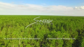 031 Joyce wildlife management area aerial drone cypress forest boom up