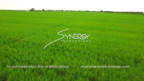 119 low flying aerial over young rice field 1 Louisiana agriculture