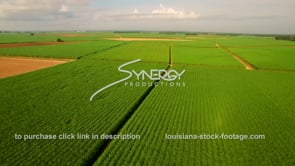 129 wide aerial drone view sugar cane field Louisiana agriculture