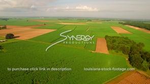 130 Super wide shot sugar cane field Louisiana agriculture 2