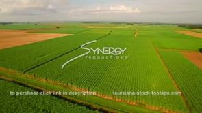 131 Epic dramatic aerial descent sugar cane field Louisiana agriculture