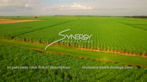 132 sugar cane field aerial drone view Louisiana agriculture