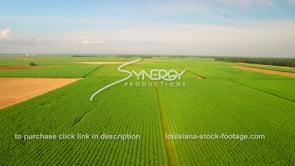 136 Epic sugar cane field Louisiana agriculture