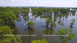 141 Very nice dramatic aerial drone view over Louisiana cypress trees in swamp