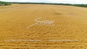 068 Epic aerial drone view wheat field 4