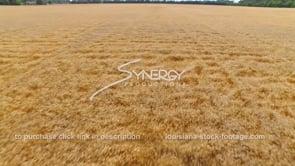 069 aerial drone medium shot over wheat field 5