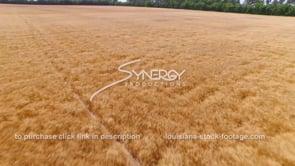 070 Medium shot wheat field aerial 6