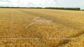 073 CU aerial drone view of wheat field dolly in 1