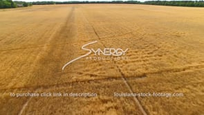 075 aerial drone ascent from wheat field to sky dolly out