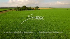 133 Epic awesome shot flying over sugar cane field