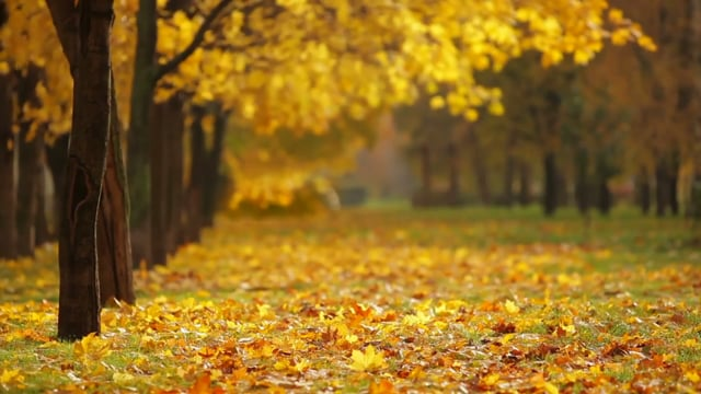 fall, autumn, season