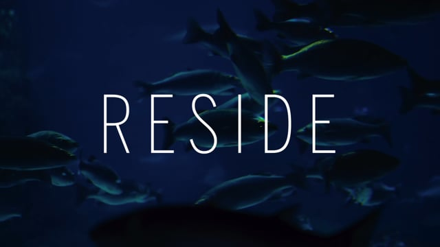 Sotheby's International Realty - Reside Moments - Diving In
