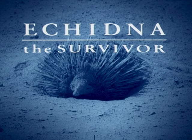 Echidna The Survivor
