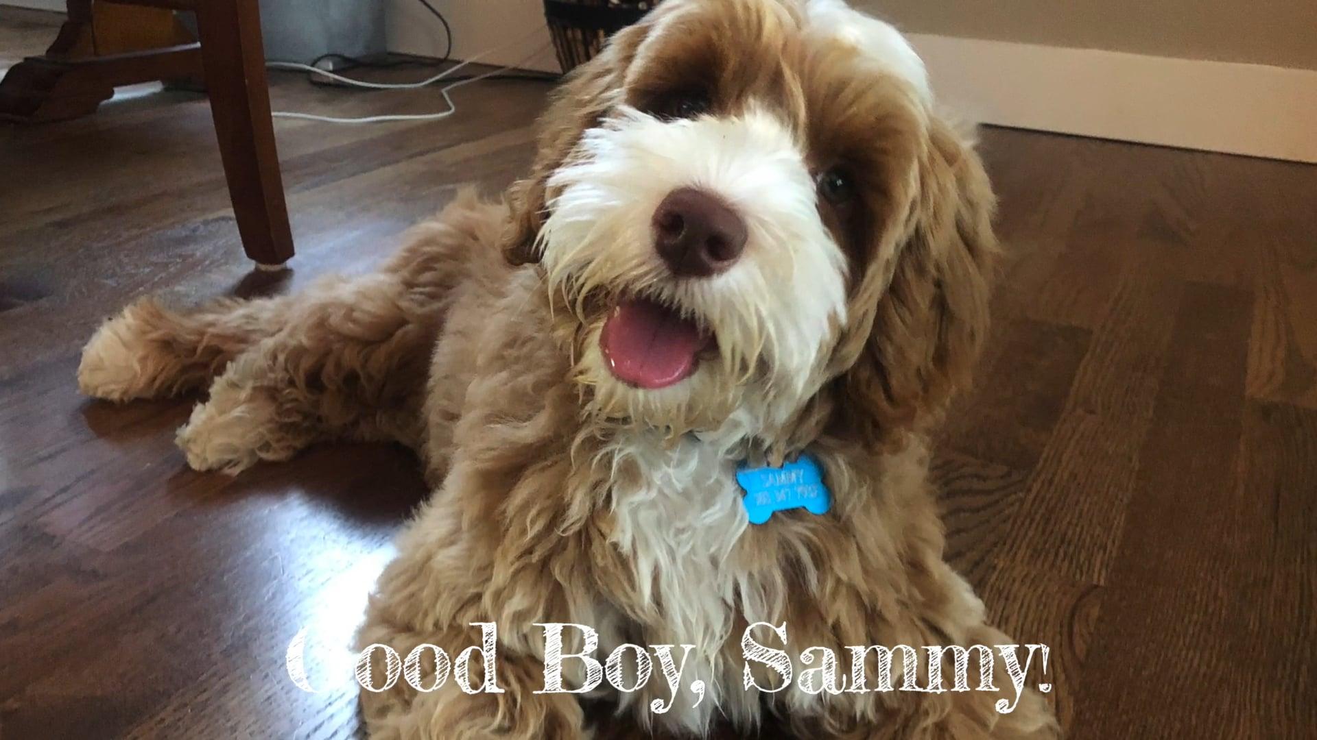 Toilet Paper Sammy