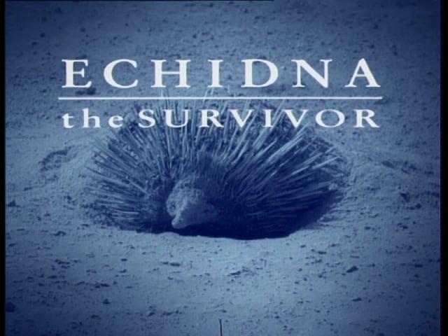 Echidna The Survivor (trailer)