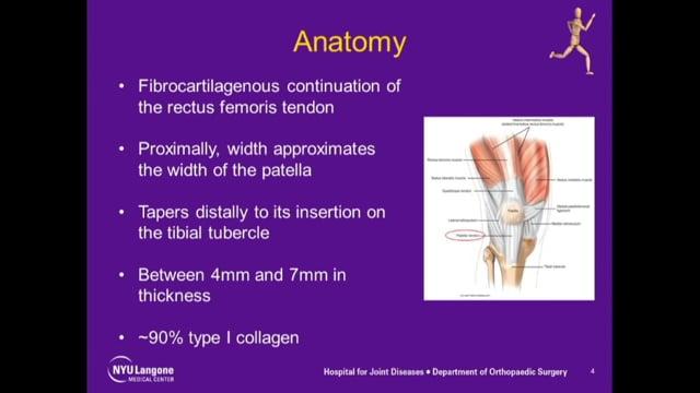 Chronic Patellar Tendon Reconstruction Multiple Cases