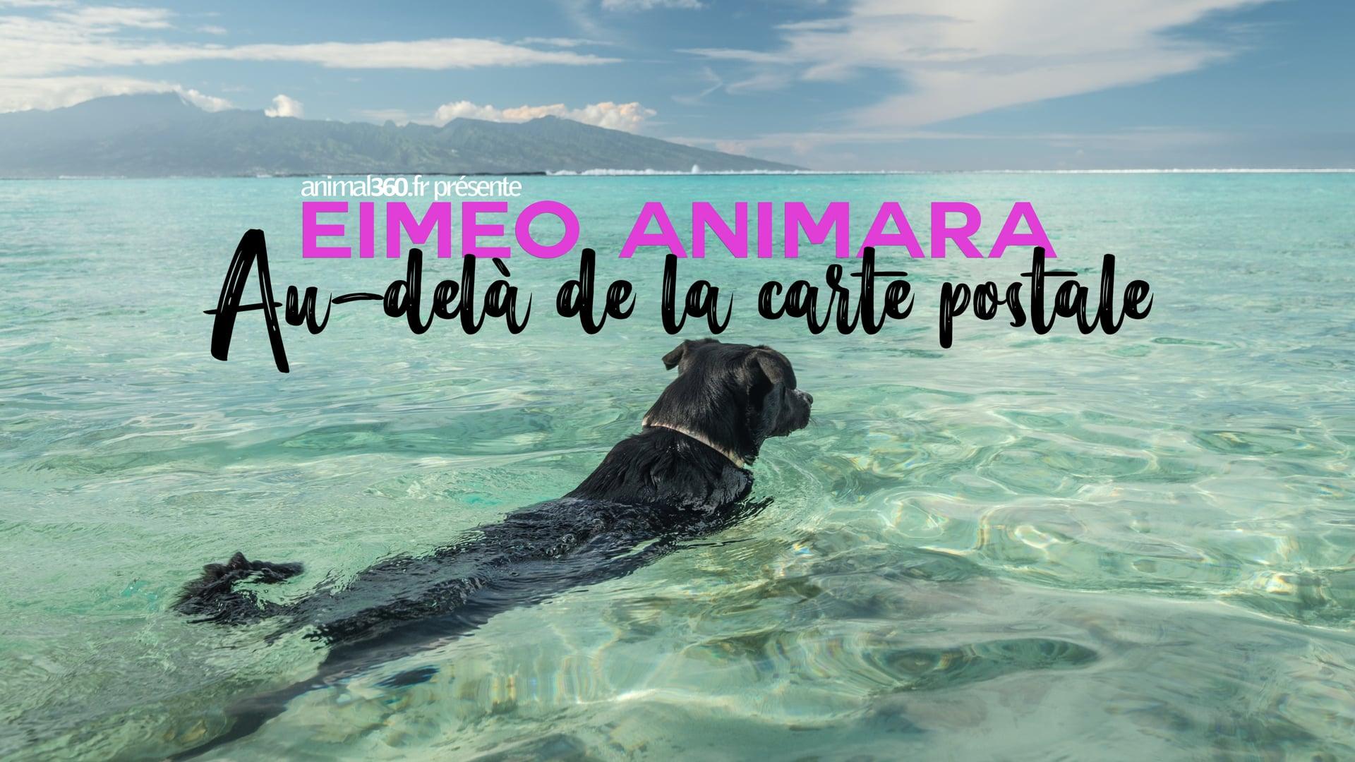 Eimeo Animara, beyond the postcard