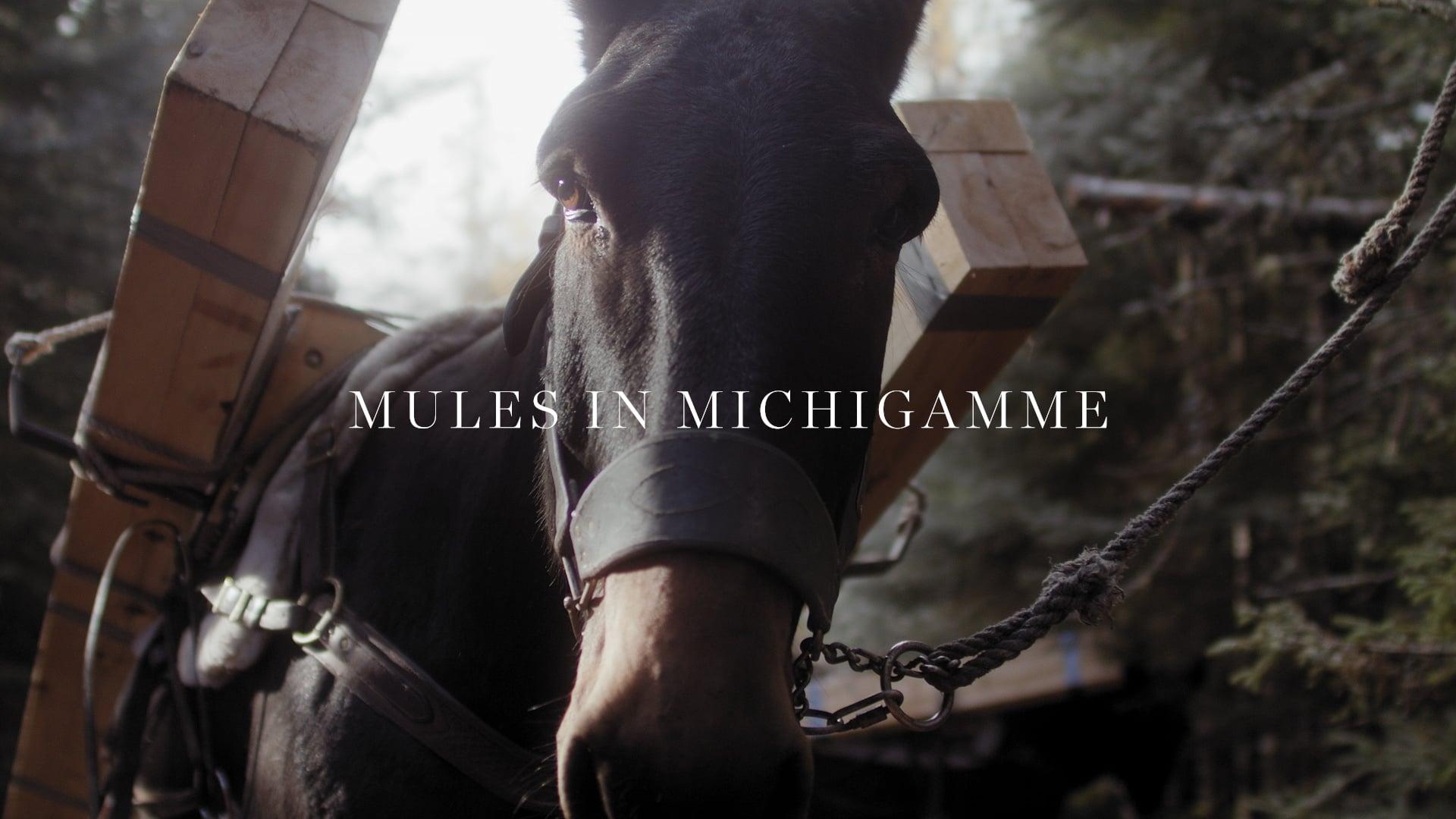 Mules In Michigamme