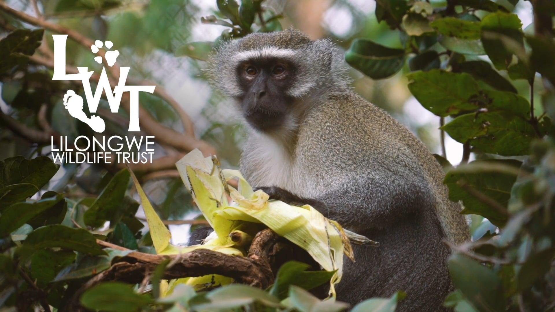 Lilongwe Wildlife Volunteer Experience