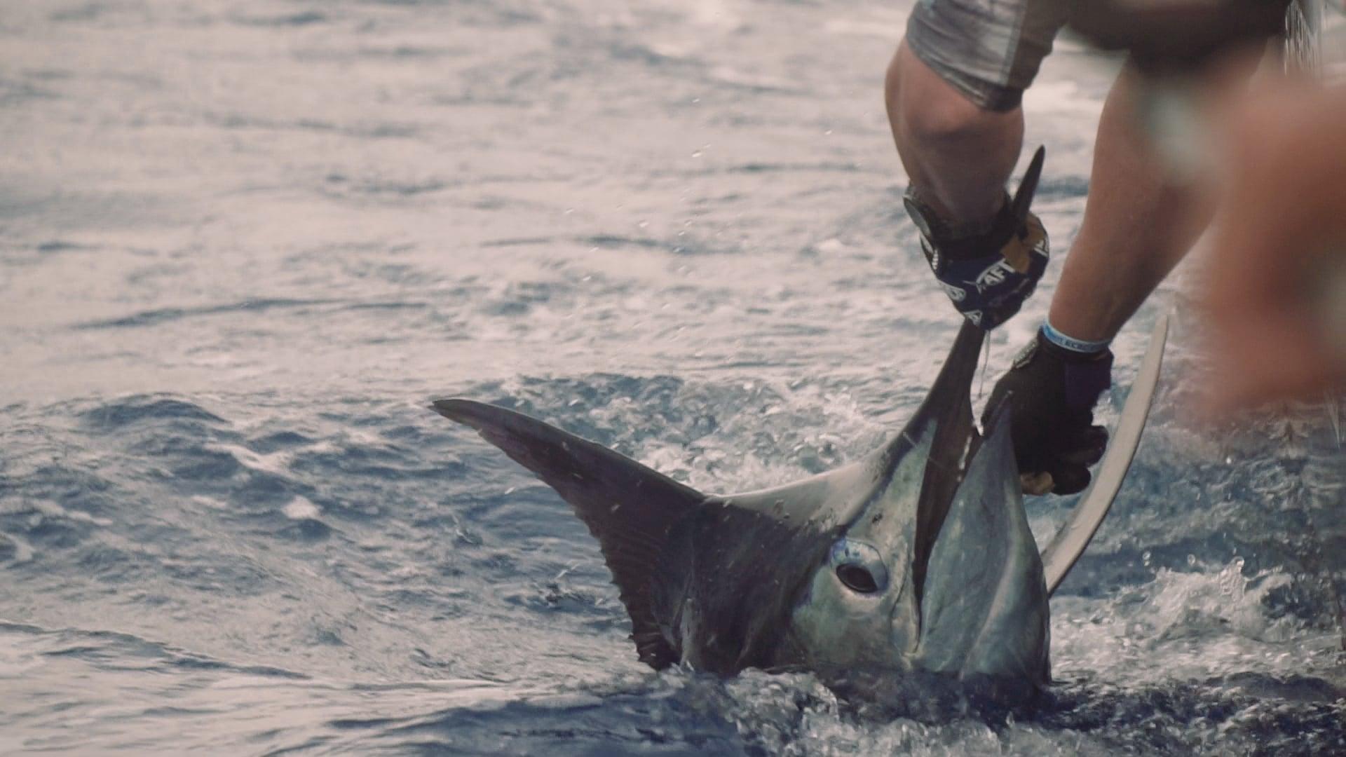 Double J Fishing | Emerald Coast Blue Marlin Classic at Sandestin