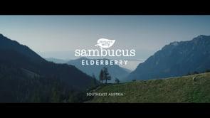 Nature's Way Sambucus :30