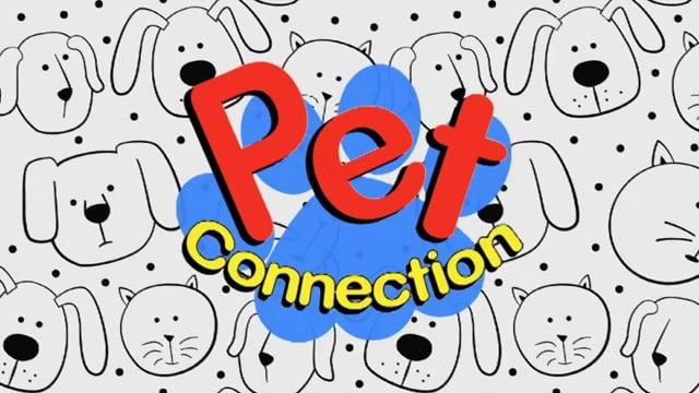 Pet Connection – Hooch