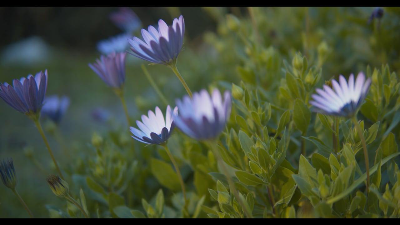 Flowers in the Wind V1_4K