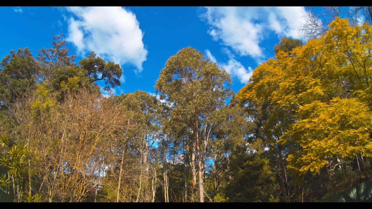 The Singing Trees_4K