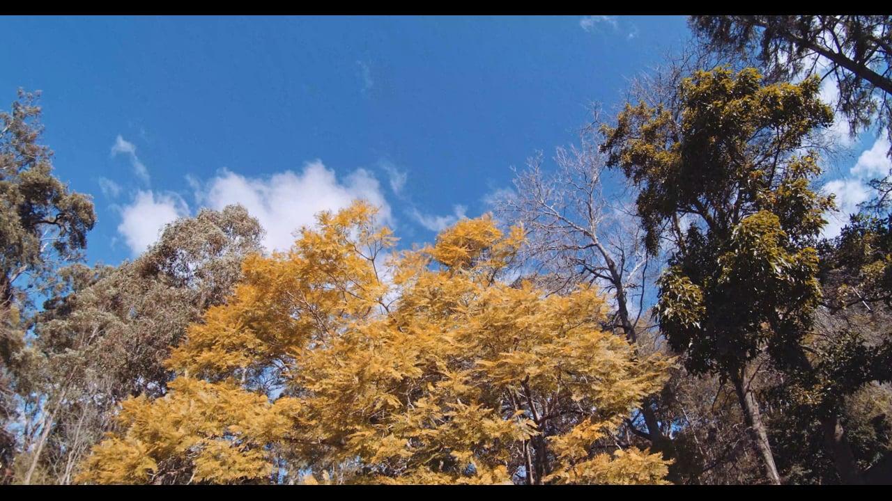 The Singing Trees V2_4K