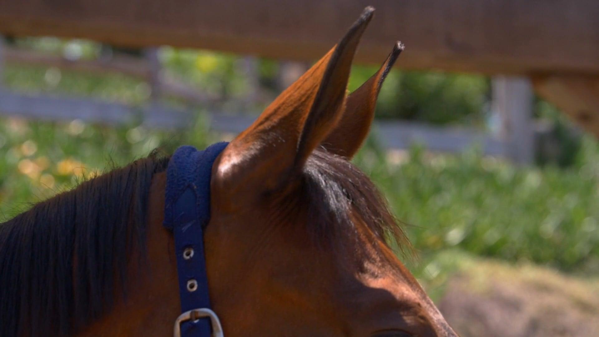 Horses Reel