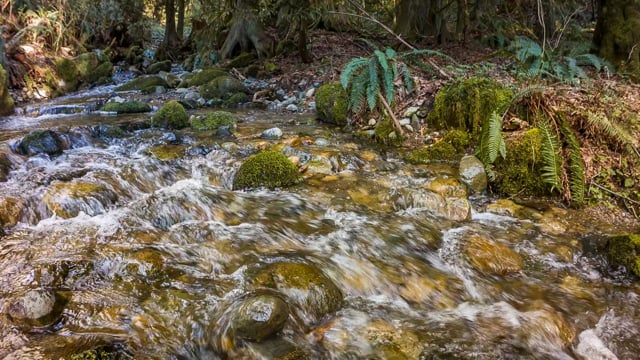 Peaceful Forest River