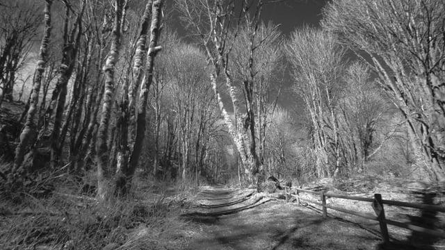 Coal Creek Walking Trail, Washington State