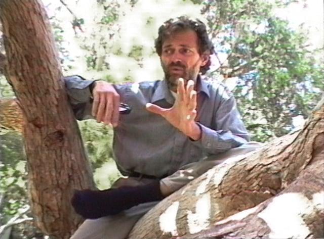 ANTECEDENCE: Terence McKenna Talks Virtual Reality (1991)