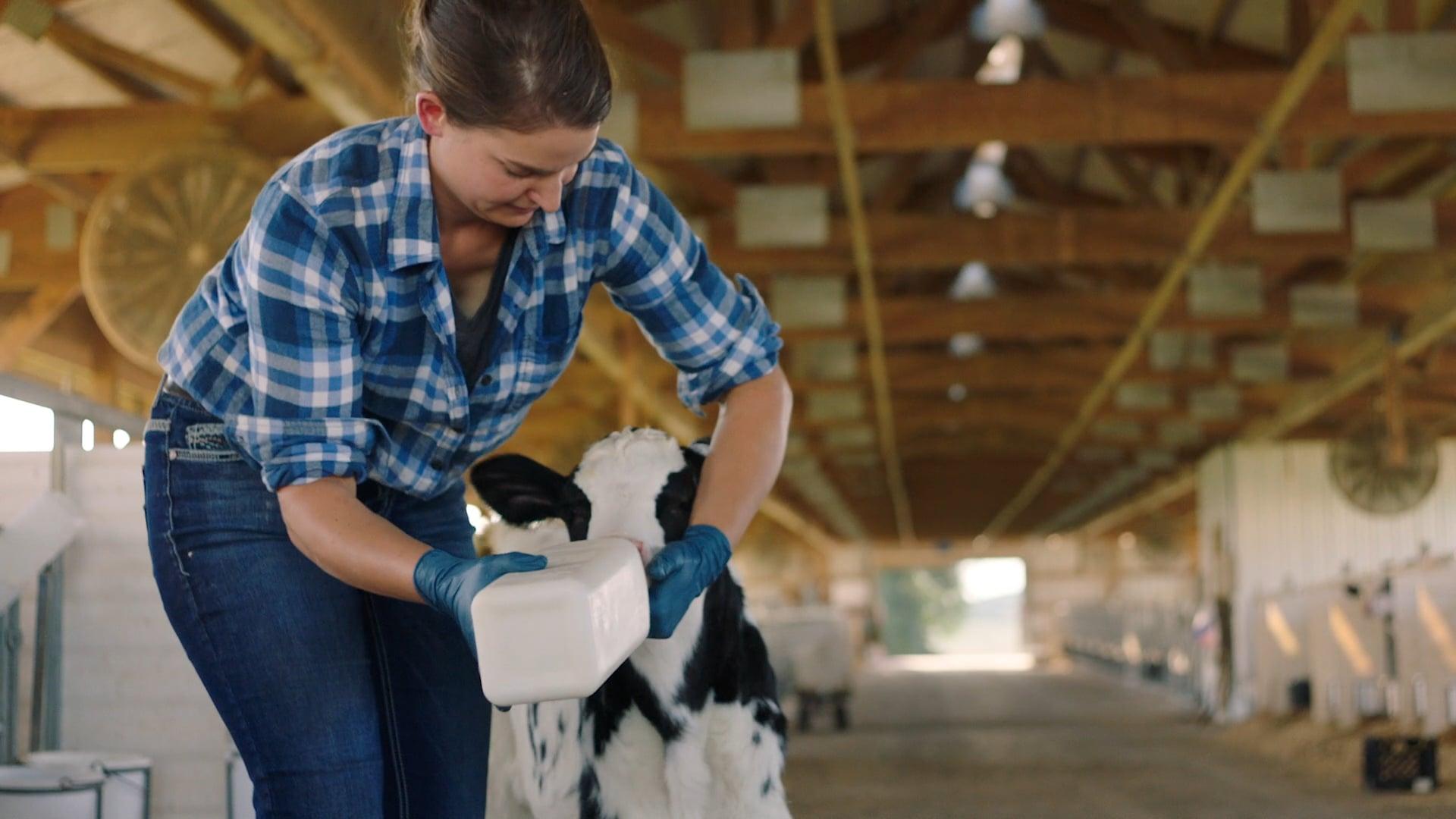 Dairy Farmers Wisconsin - FOLLOW THE LIGHT