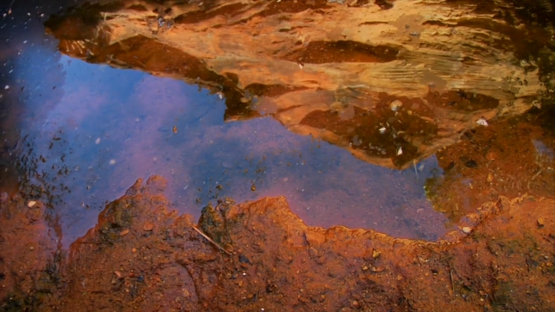 David Bridie - Permanent Water