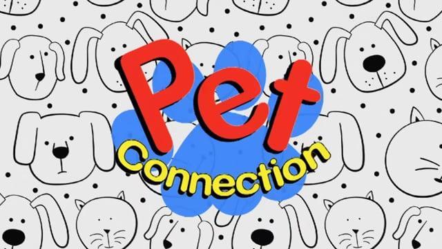 Pet Connection - Shorty