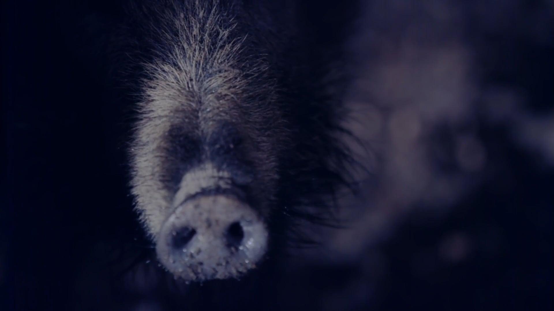 TerraX Trailer Wildschweine