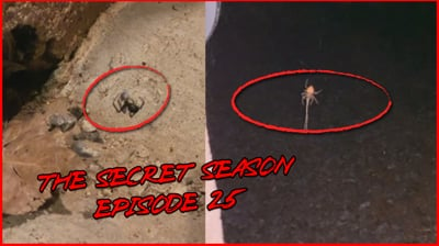 Attack Of The MUTANT Spiders! - (The Secret Season Ep.25)