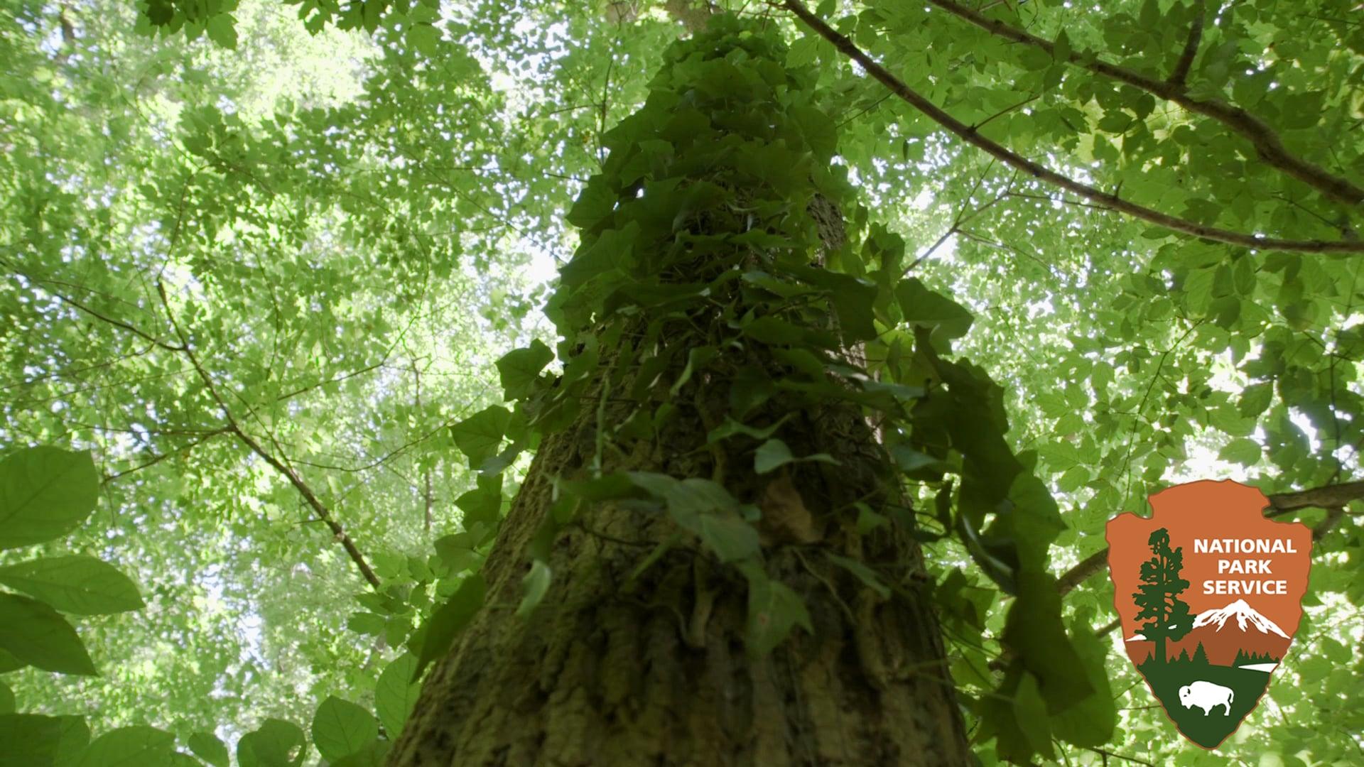 Invasive Plants: Community Stewardship for a Healthy Park