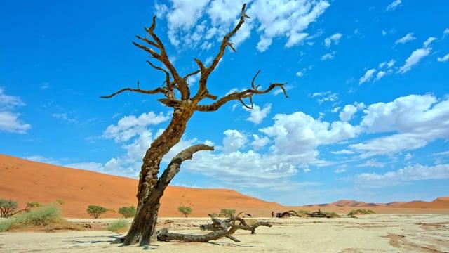 Namibia and Botswana in 4K - Fabulous African Views